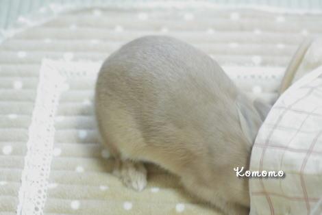 komomo_20101028181424.jpg
