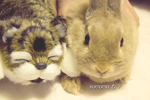 komomo_20110309170645.jpg