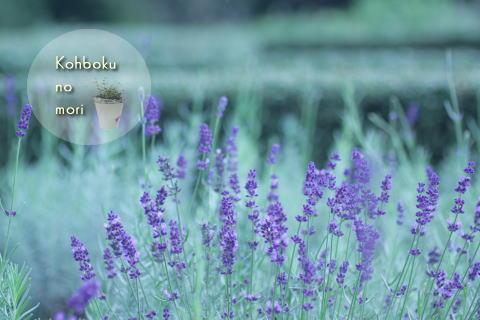 kouboku3.jpg