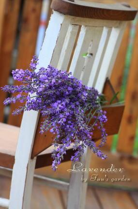 lavender_20100701155226.jpg