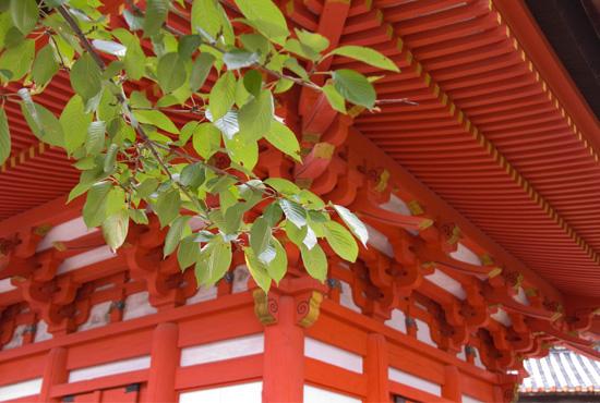 miyajima2_20111021195727.jpg