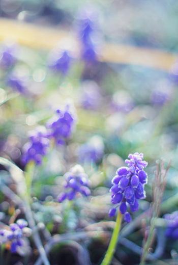 musukari_20110412175036.jpg