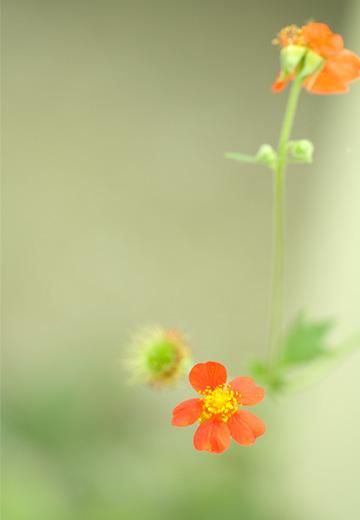 niwa_20110609160607.jpg