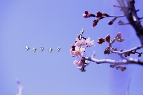 sakurasaku.jpg