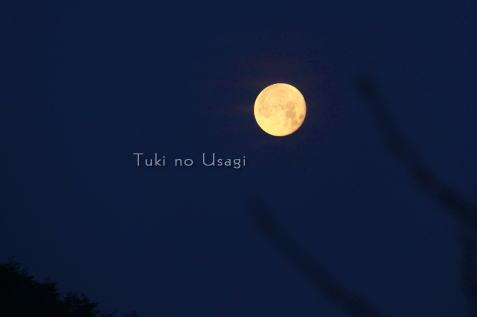tuki_20100506185052.jpg