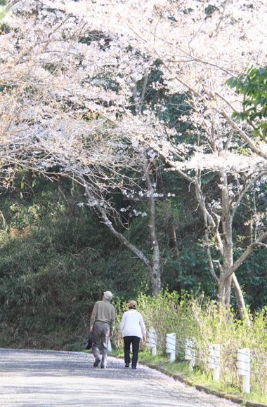 yoshinoyama1.jpg