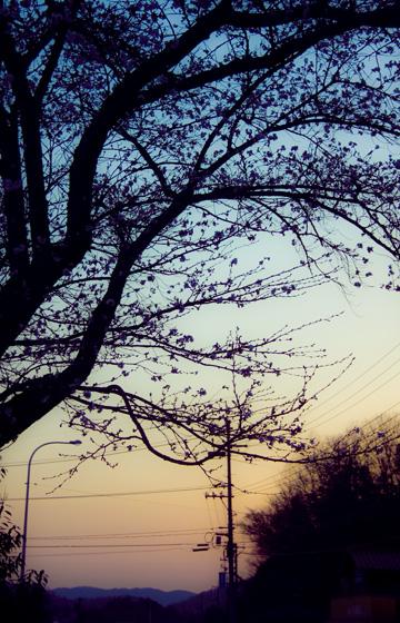 yuugure_20110414160525.jpg