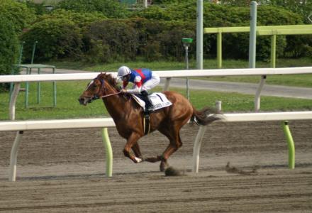PICT0048競走馬