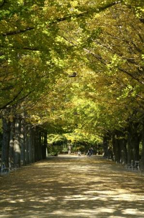 PICT0023昭和記念公園