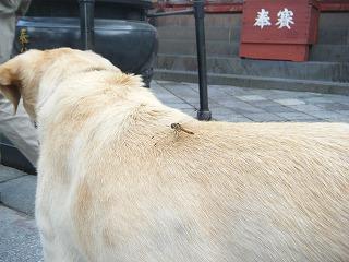 2011_0822NASURUN0015.jpg