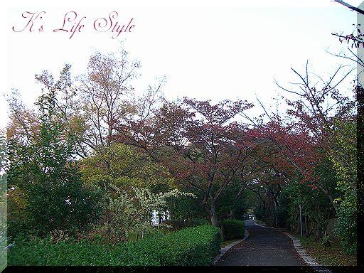 公園のさくら並木