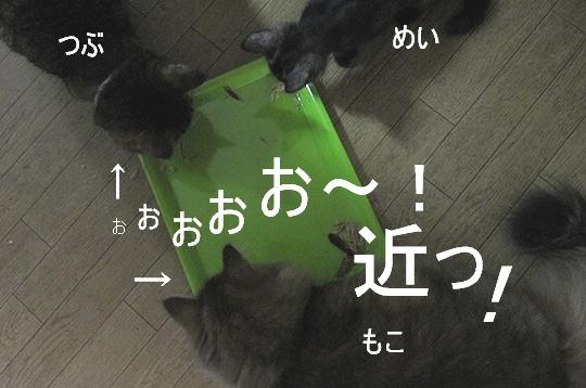 近い.jpg