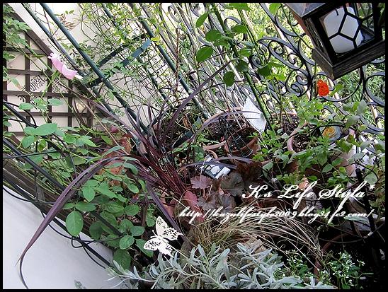 バラのお庭.jpg