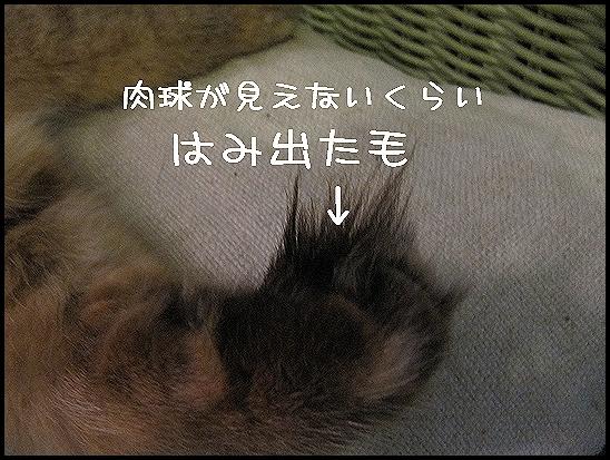 のびすぎ~.jpg