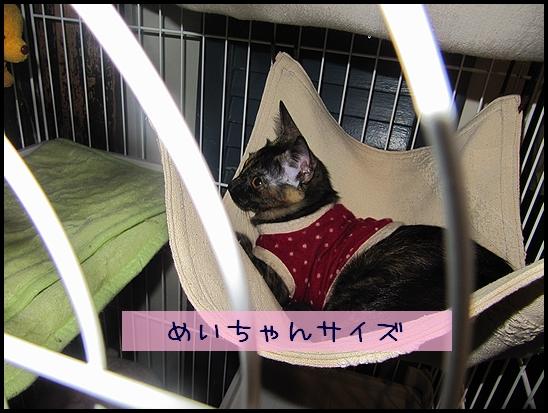めいちゃん用.jpg