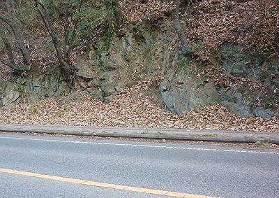道路脇に積った枯れ葉