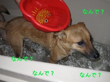 シャンプ~