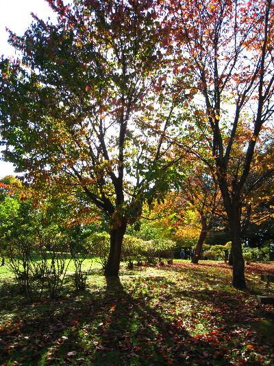 201110紅葉の木々