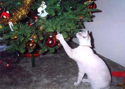 christmas snap