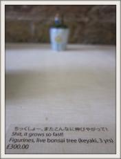 IMG_1306(1).jpg