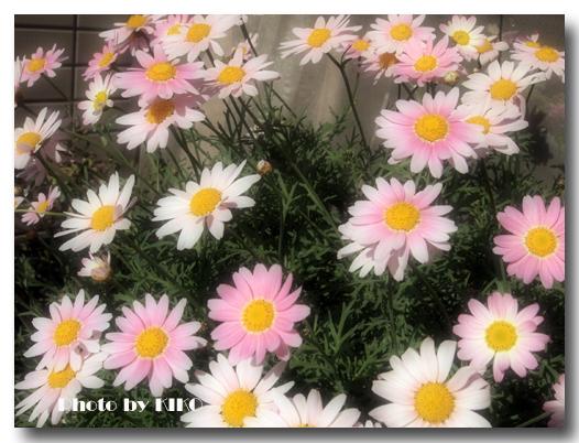 ベランダ花壇