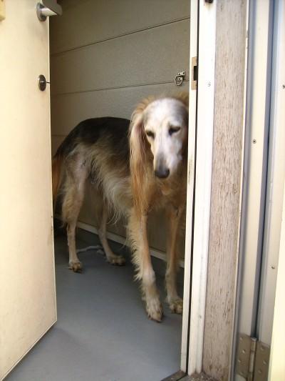 セルゲイ 犬舎のドア2