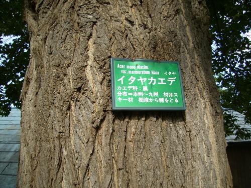 板屋楓 小樽市役所 看板