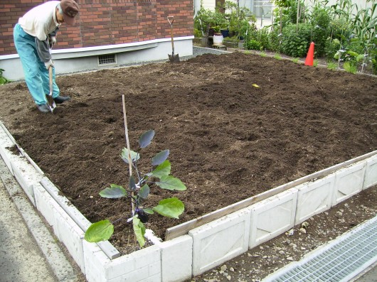 大根種まき前の土おこし