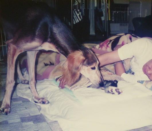 セルゲイ生後7ヶ月 もんちゃんの病気