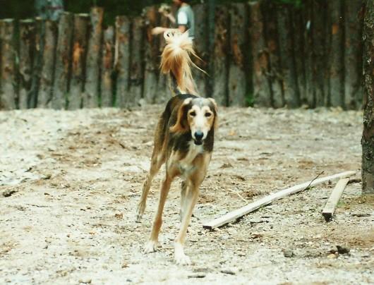 セルゲイ滝野のドッグラン開設記念6