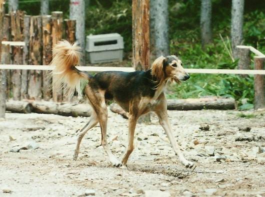 セルゲイ滝野のドッグラン開設記念7