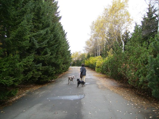 インみのり百合が原公園散歩帰り道