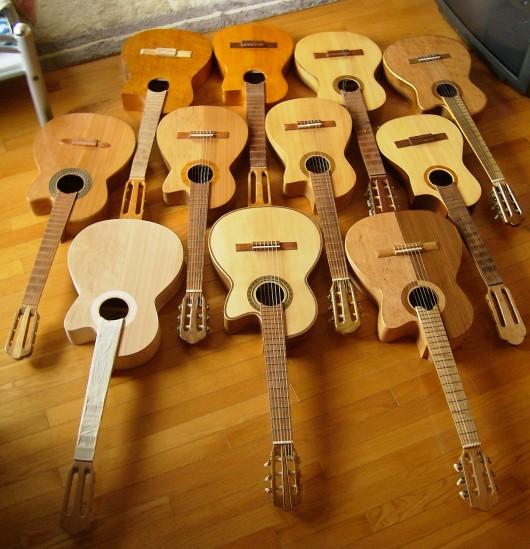 菊ギター群 さかさま