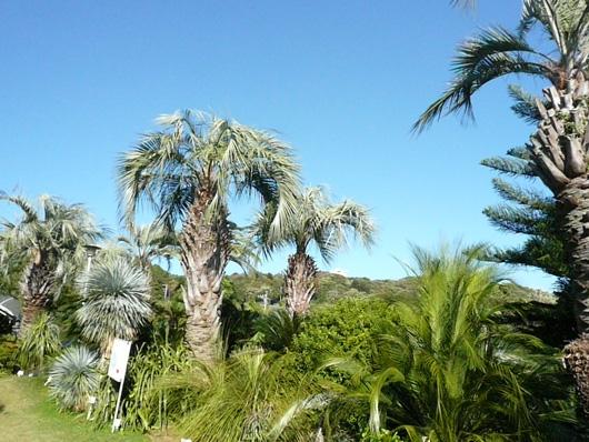 熱川植物園