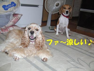 CIMG2559_20110905213751.jpg