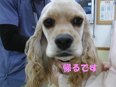 CIMG2923_sh01.jpg