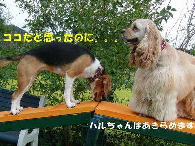 CIMG3497_20111005223832.jpg