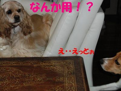 CIMG8177_sh01.jpg