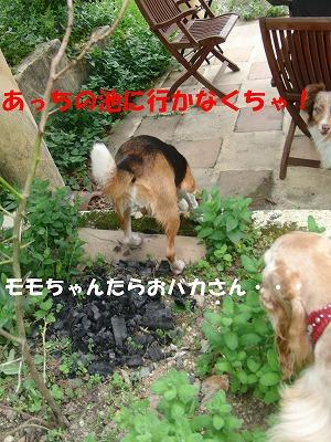 CIMG8461_sh01.jpg