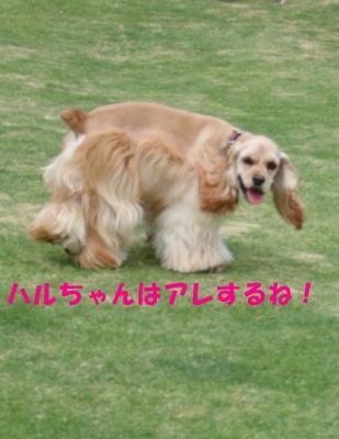 CIMG8464_sh01.jpg