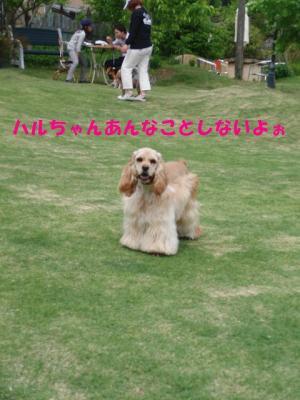 CIMG8465_sh01.jpg
