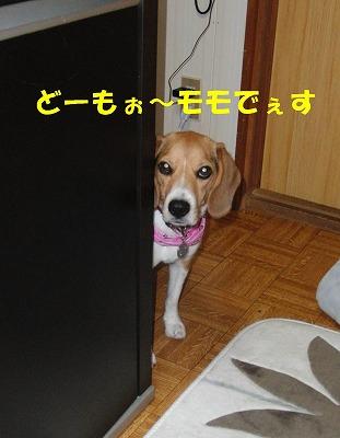 CIMG9064_sh01.jpg