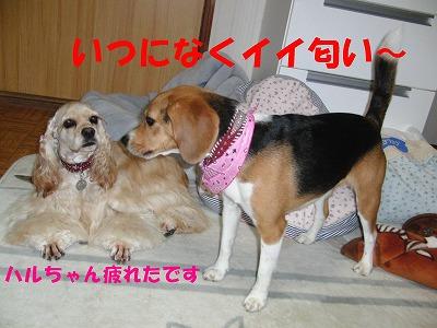 CIMG9089_sh01.jpg