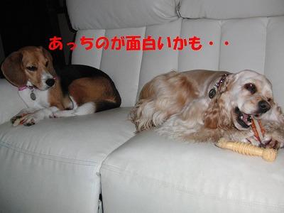 CIMG9349_20110618235939.jpg