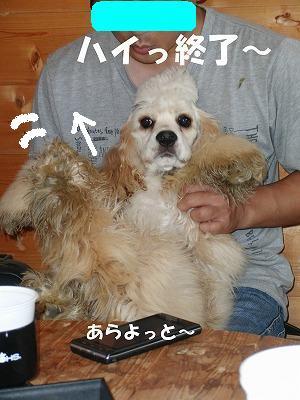 CIMG9469_20110620223607.jpg