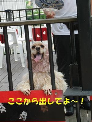 CIMG9904_20110626205607.jpg