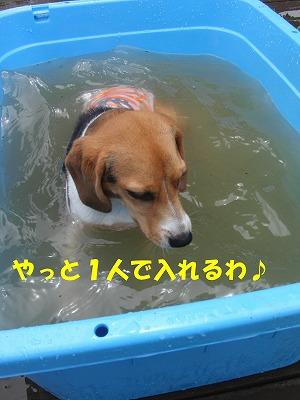 CIMG9920_20110628221556.jpg