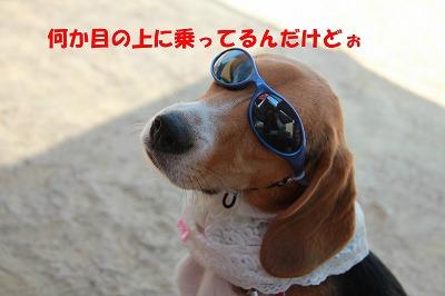 IMG_3091_sh01.jpg