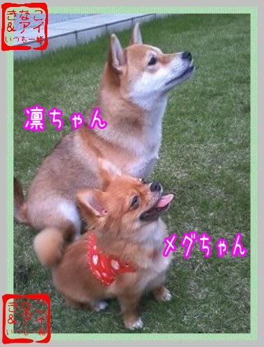 XS凛ちゃん&メグちゃん.d
