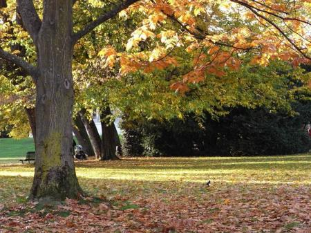 秋の散歩01